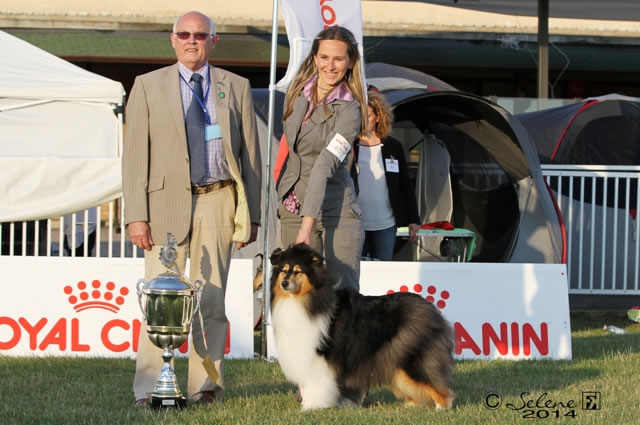 Allevamento Keyline Collies